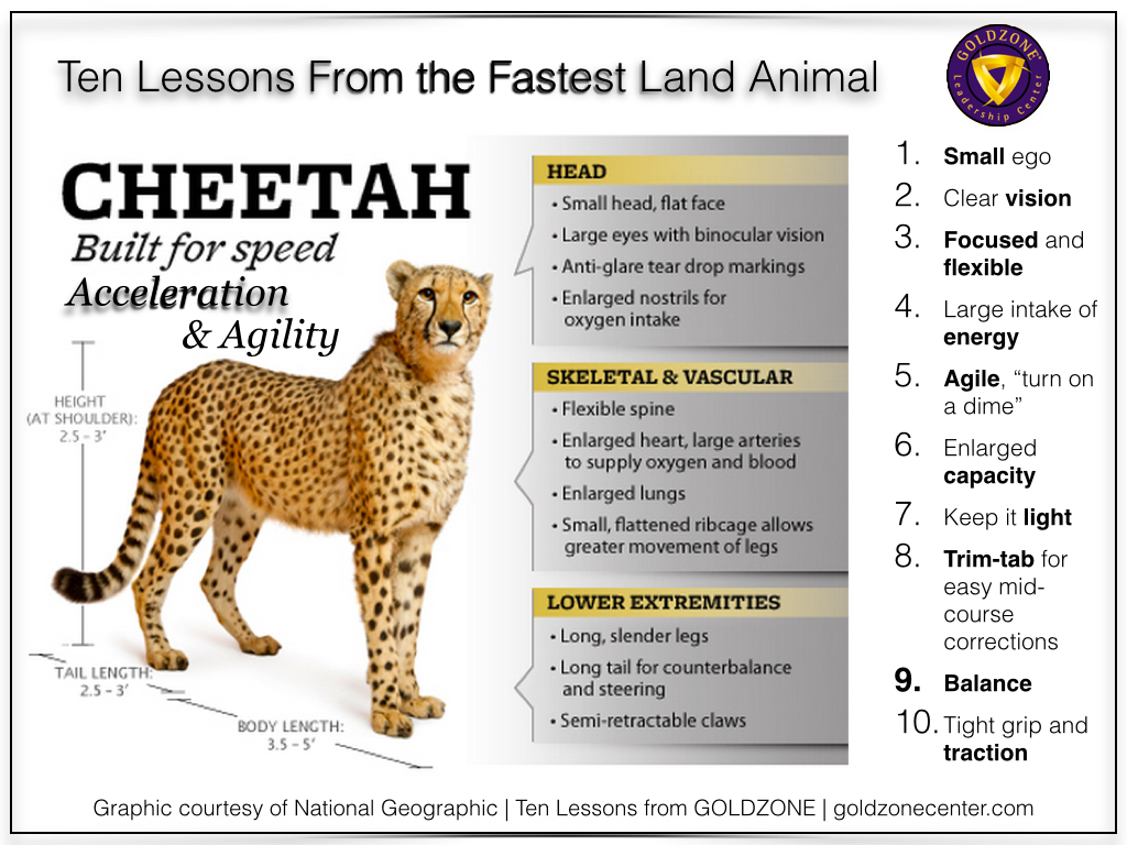 Cheetah Ten Lessons.001